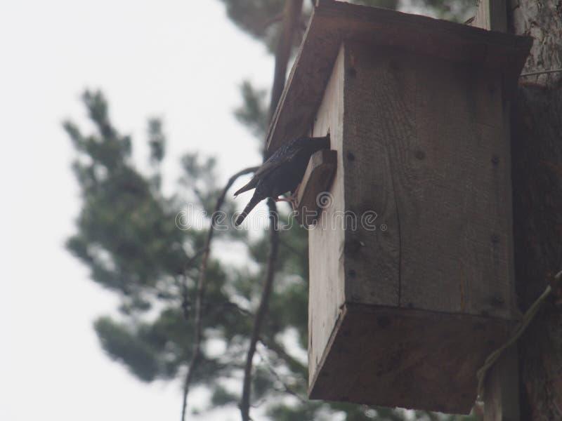 Szpaczek blisko birdhouse Sztuczny ptaka gniazdeczko obrazy royalty free