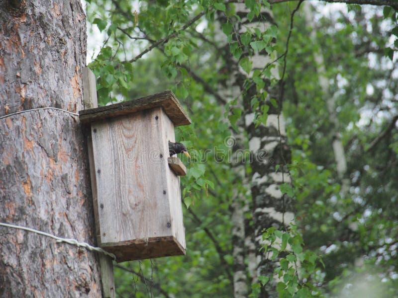 Szpaczek blisko birdhouse Sztuczny ptaka gniazdeczko fotografia stock