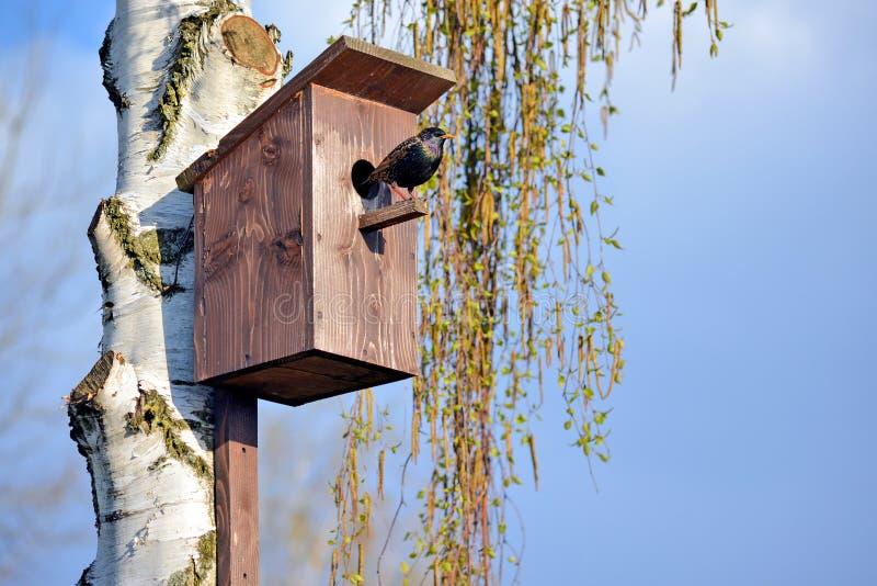 Szpaczek na birdhouse zdjęcia stock