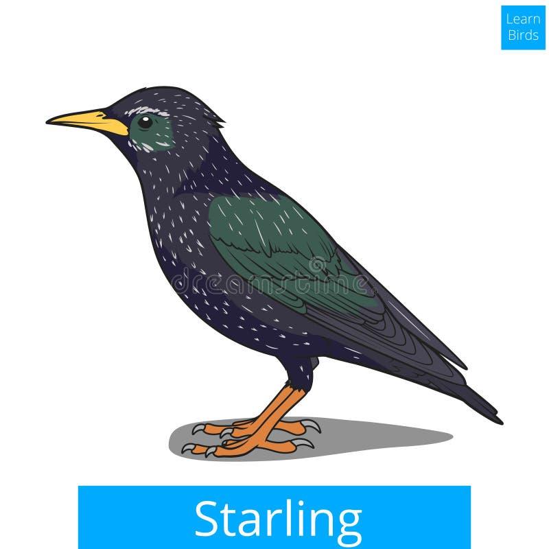 Szpaczek uczy się ptaka edukacyjnego gemowego wektor royalty ilustracja