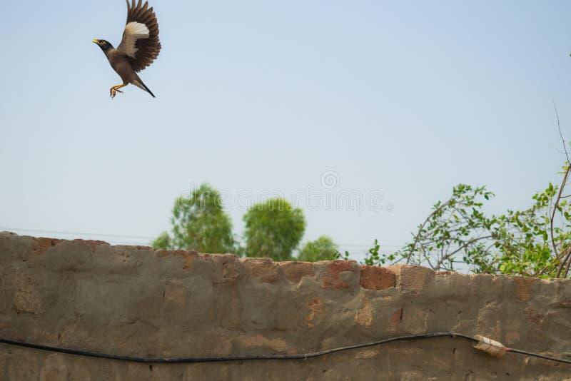 Szpaczka latanie w powietrzu fotografia royalty free