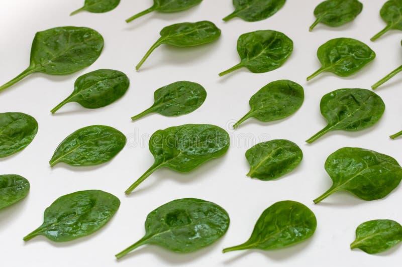 Szpinaków liście Świezi zieleni szpinaki na białym tle Odgórny widok obraz stock