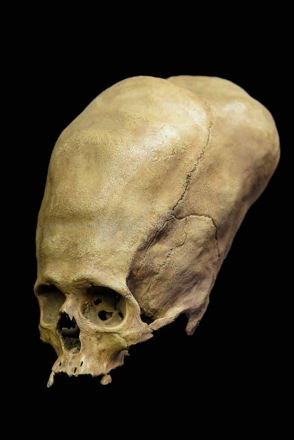 Szpotawa Antyczna Peruwiańska czaszka zdjęcie stock