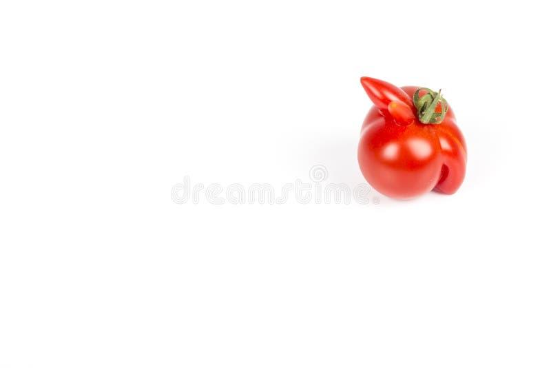 Szpotawy czerwony pomidor na białym tle obraz stock