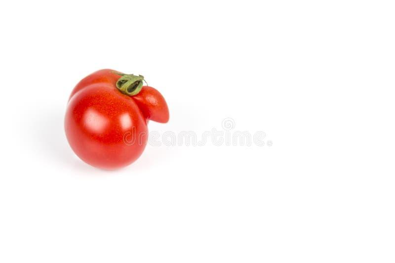 Szpotawy czerwony pomidor na białym tle zdjęcia stock