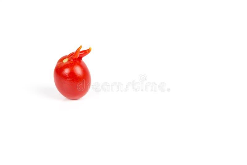 Szpotawy czerwony pomidor na białym tle zdjęcia royalty free