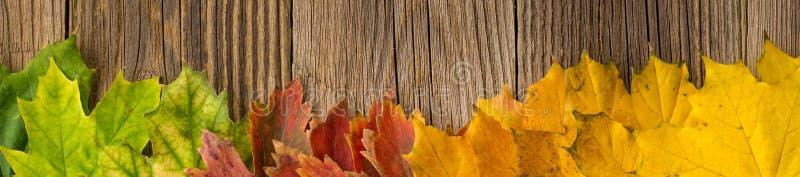 Sztandar jesień czasu tło, Niektóre spadek opuszcza na wietrzejącym drewnie z kopii przestrzenią dla twój teksta obraz stock