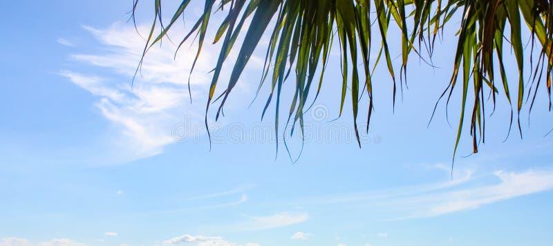 Sztandar niebieskie niebo z wispy palmą i chmurami opuszcza przy wierzchołkiem - pokój dla kopii zdjęcia stock