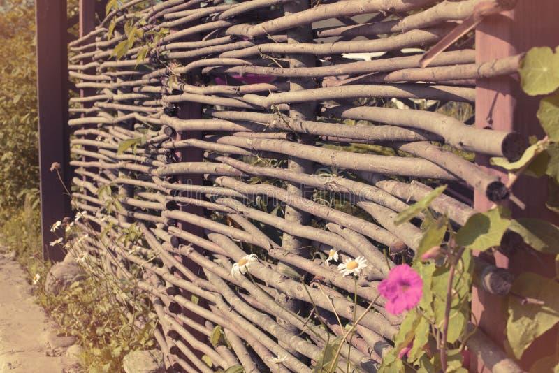 Sztandar Piękna mała menchia kwitnie Naturalnego zamazanego tło obraz royalty free