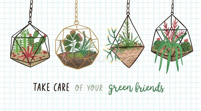 Sztandar z sukulentami, kaktusami i inny, zasadza dorośnięcie w, Bierze opiekę Twój i wiszących szklanych wiwariach lub florarium ilustracji