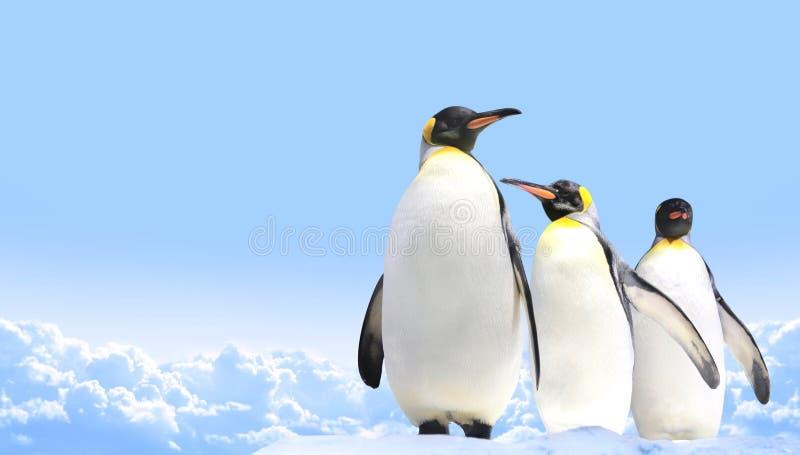 Sztandar z trzy cesarzów pingwinami na niebieskiego nieba tle zdjęcia stock
