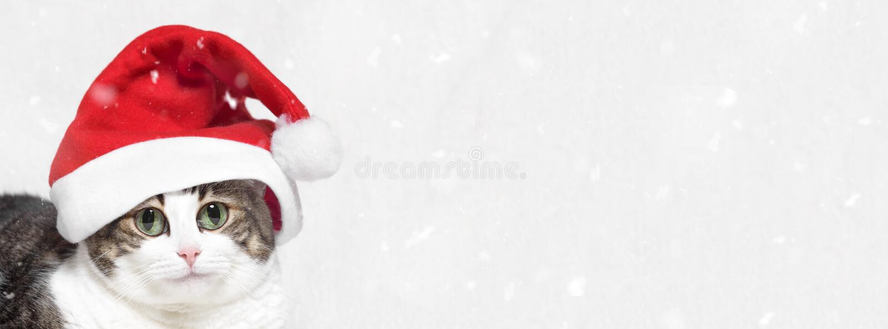 sztandaru bożych narodzeń eps10 ilustraci wektor dużych oczu śmieszny kot w Święty Mikołaj kapeluszu i śnieżni płatki na białym t zdjęcia royalty free