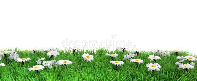 sztandaru kwiatu łąka fotografia stock