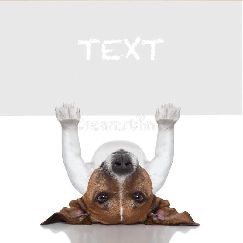 Sztandaru pies zdjęcie royalty free