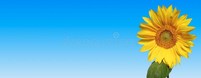 sztandaru słonecznik zdjęcia stock