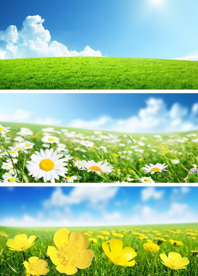 Sztandary wiosny trawa i kwiaty obrazy stock