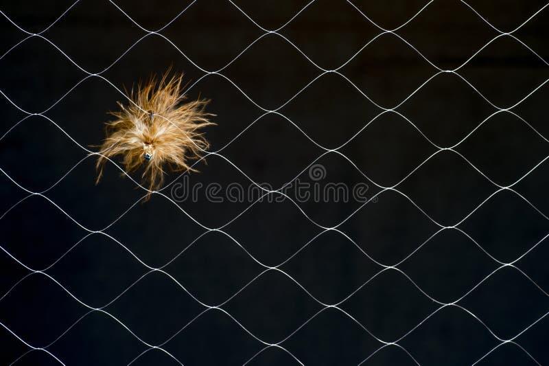 Sztuczna komarnica w syntetycznej sieci na ciemnym tle Pojęcie podobieństwo istny insekta połowu nęcenie zdjęcia stock