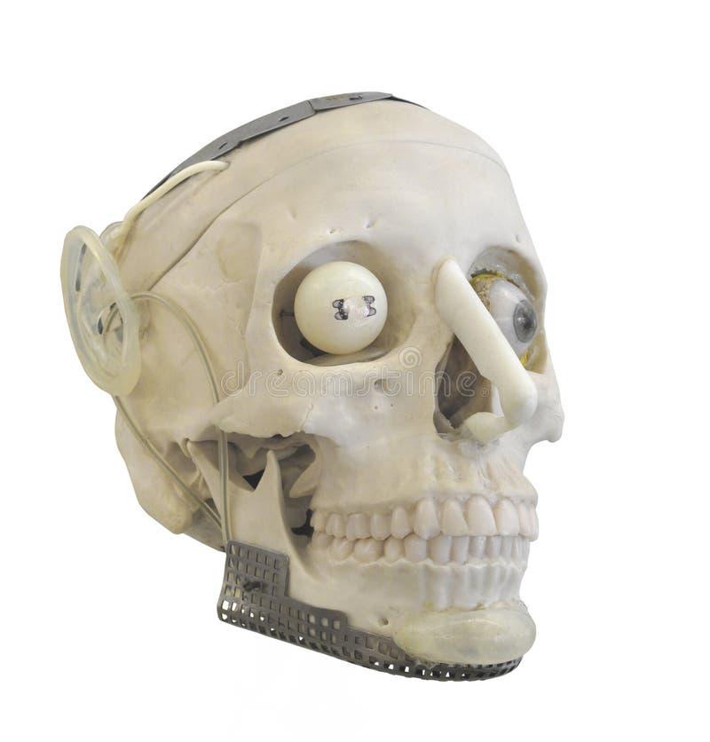 Sztuczna ludzka czaszka odizolowywająca. zdjęcia royalty free