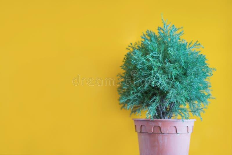 Sztuczna zielona roślina z kolor żółty ścianą, rocznika styl z sel zdjęcia stock