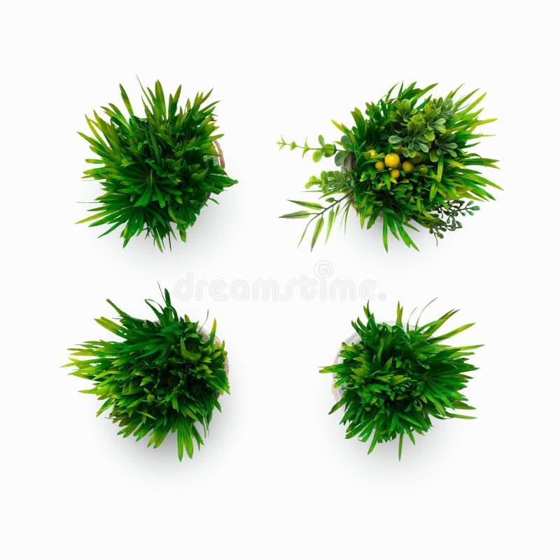 Sztuczne trawiaste rośliny w garnkach odizolowywających na bielu fotografia royalty free