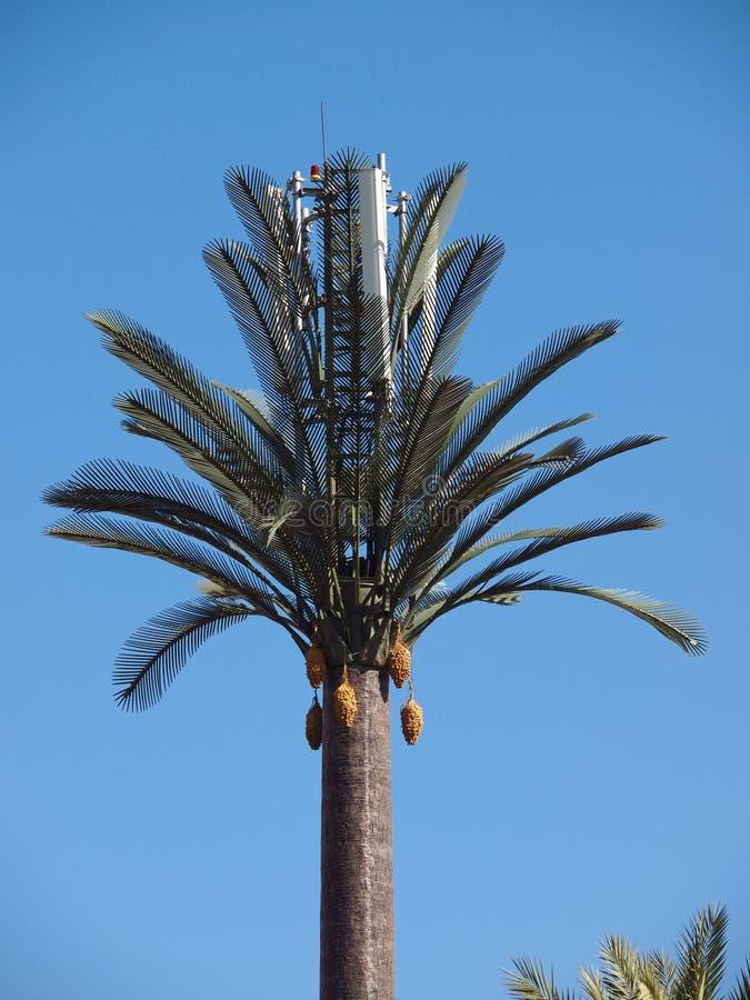 Sztuczny drzewko palmowe zdjęcia royalty free