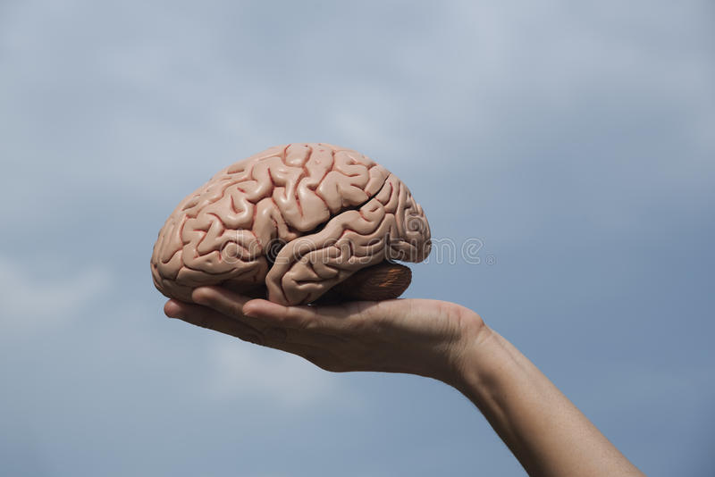 Sztuczny ludzki mózg wzorcowy i ręki mienie fotografia stock