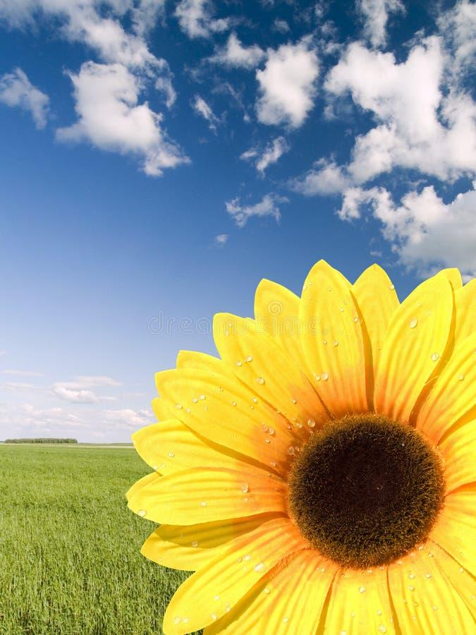 sztuczny słonecznik zdjęcia stock