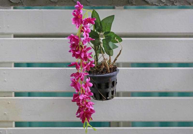 Sztuczny storczykowy kwiat w klingerycie puszkuje obwieszenie na ścianach zdjęcie stock