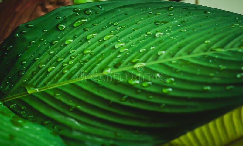 Sztuka abstrakta woda Opuszcza tło na zielonym liściu zdjęcia royalty free