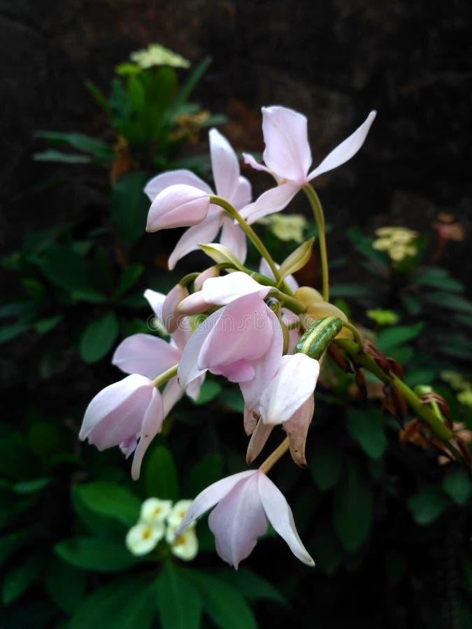 Sztuka natura piękny kwiat fotografia royalty free