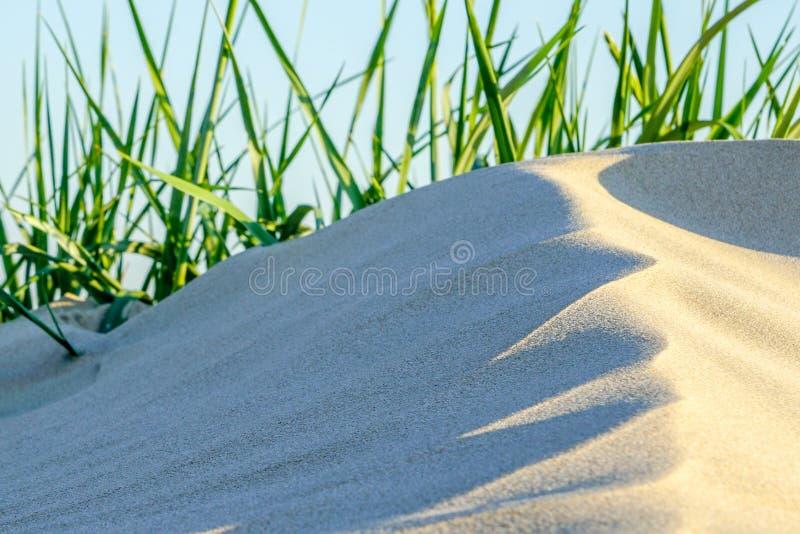 Sztuka wiatr, biały piasek i zielona trawa na plaży, zdjęcie royalty free