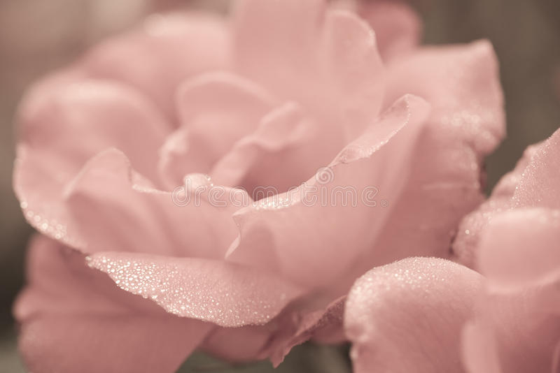 Sztuki kwiecisty tło z róża kwiatem fotografia royalty free