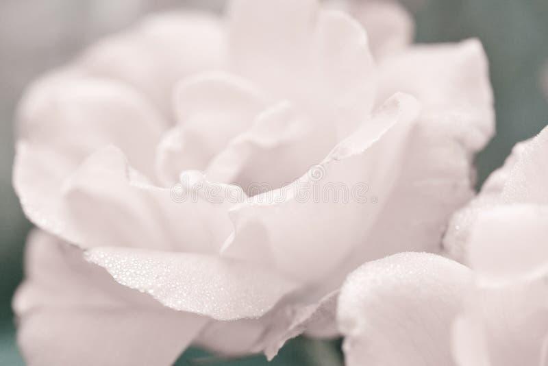 Sztuki kwiecisty tło z róża kwiatem obrazy royalty free