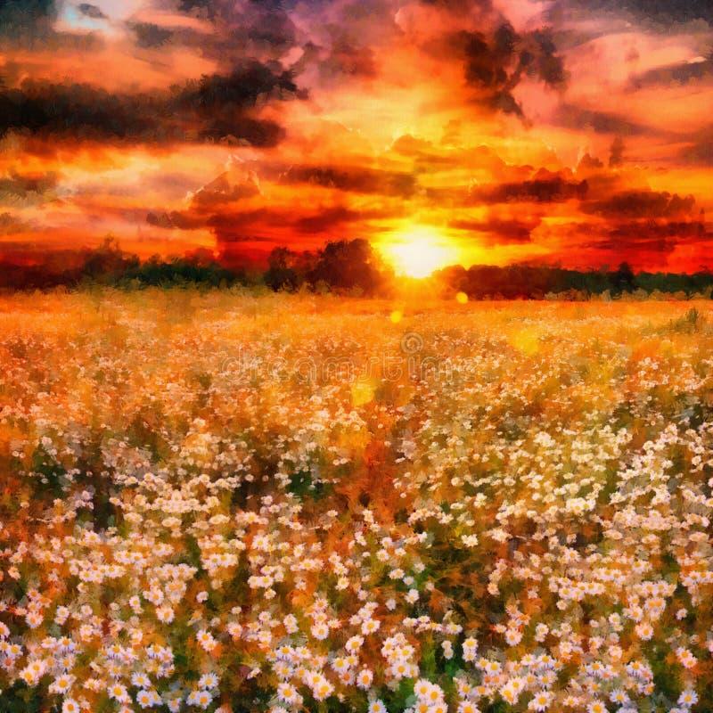 sztuki stokrotki łąka fotografia stock