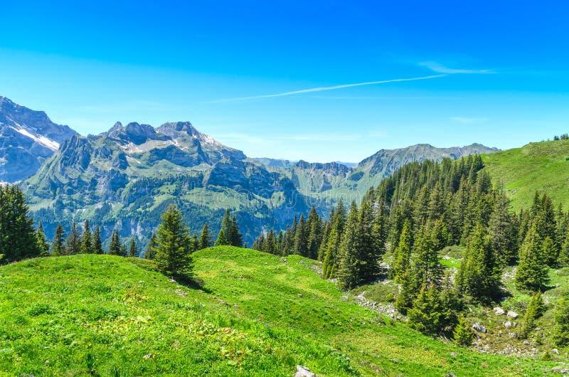 Szwajcarscy alps w lato sezonie Panorama malowniczy mou zdjęcia royalty free