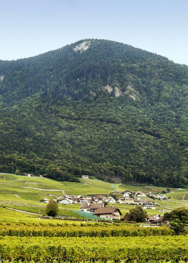Szwajcarscy winnicy z górami zdjęcie stock