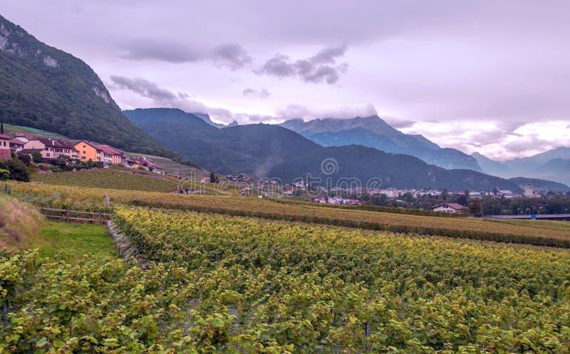 Szwajcarscy winnicy z górami obrazy stock