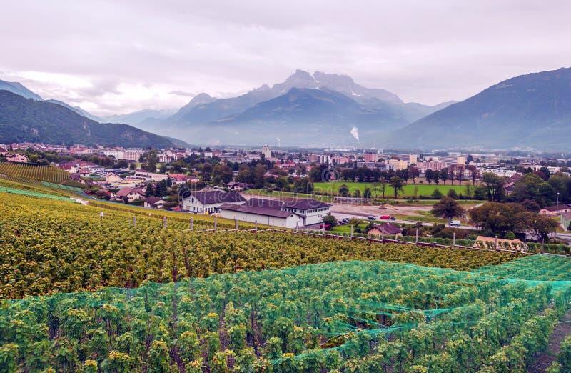Szwajcarscy winnicy z górami zdjęcie royalty free
