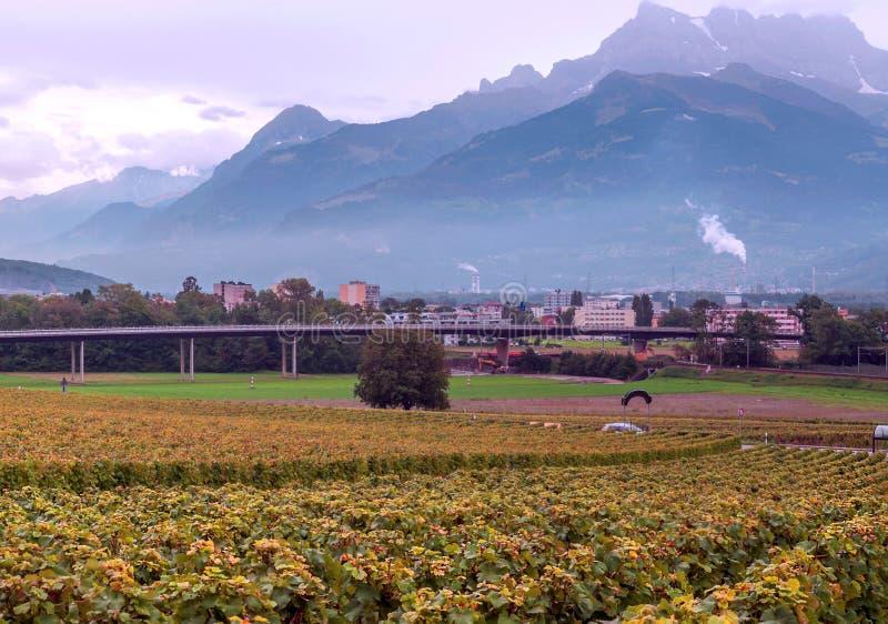 Szwajcarscy winnicy z górami zdjęcia royalty free