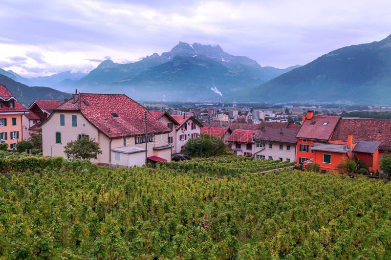 Szwajcarscy winnicy z górami fotografia stock