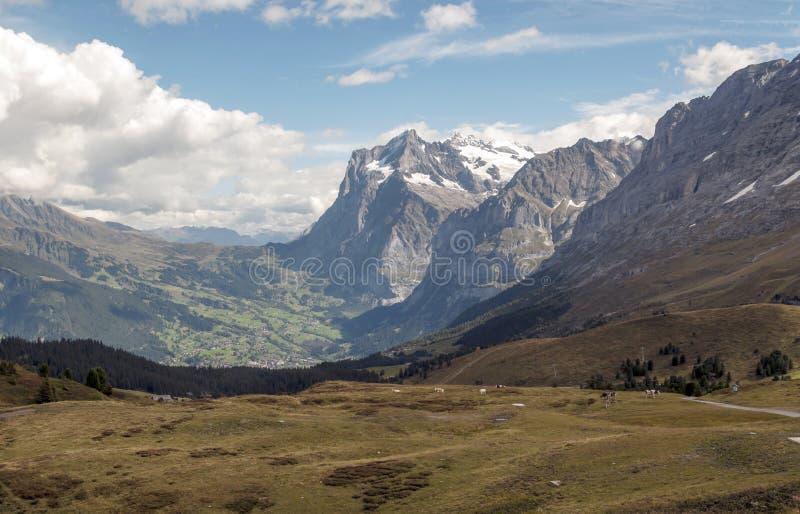 szwajcarskie alps góry obrazy royalty free