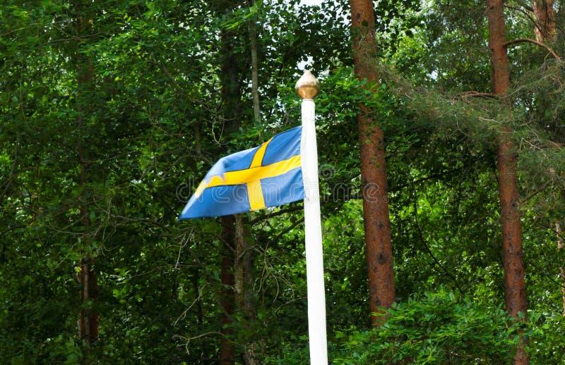 Szwedzi flaga na zielonym lasowym tle fotografia stock