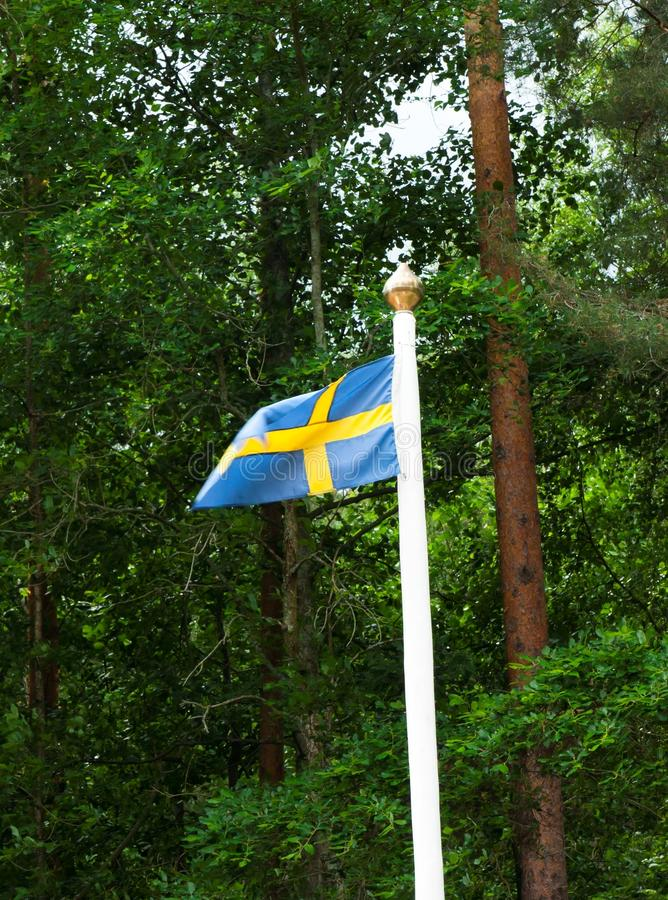 Szwedzi flaga na zielonym lasowym tle obrazy royalty free