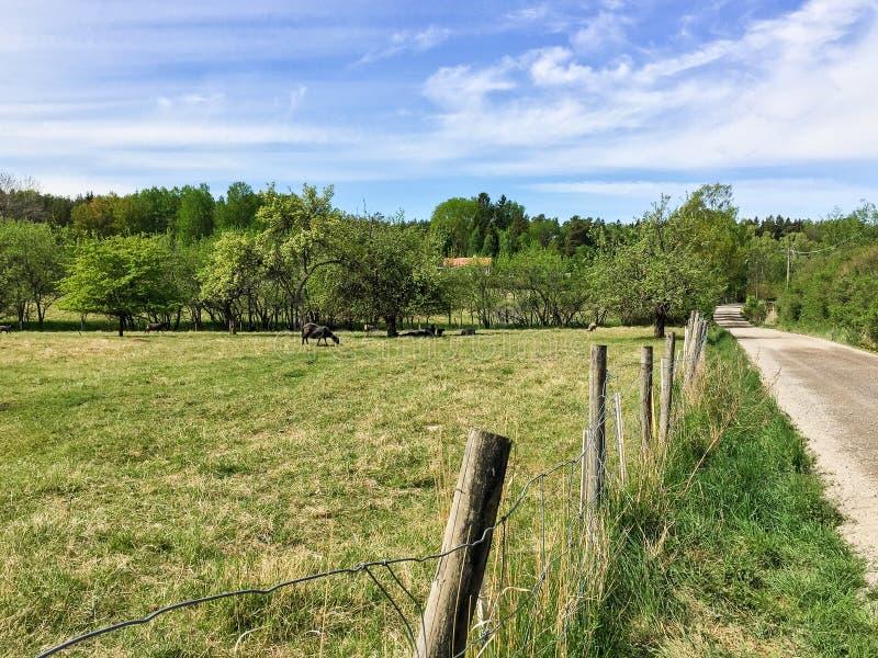 Szwedzka wieś z caklami na polu i countryroad obrazy stock