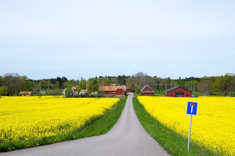 Szwedzki wiosna krajobraz zdjęcia royalty free