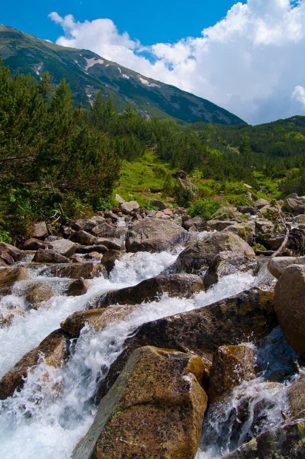 szybka rzeka obrazy royalty free