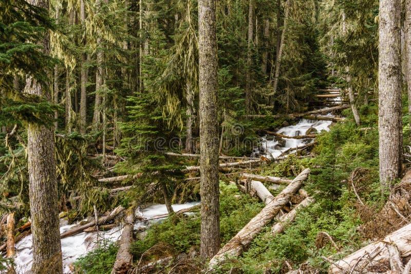 Szybki wodny strumień w dzikiej halnej zatoczce w Joffre jezior prowincjonału parka zieleni lasu krajobrazie obraz royalty free