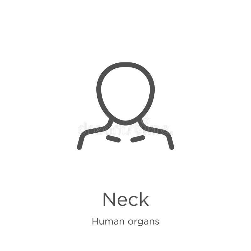 szyi ikony wektor od ludzkich organów inkasowych Cienka kreskowa szyja konturu ikony wektoru ilustracja Kontur, cienieje kreskową ilustracja wektor