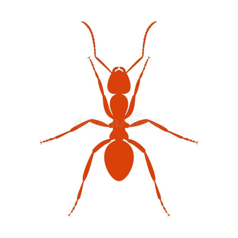 Szyldowa czerwona mrówka zamknięta w górę ilustracja wektor