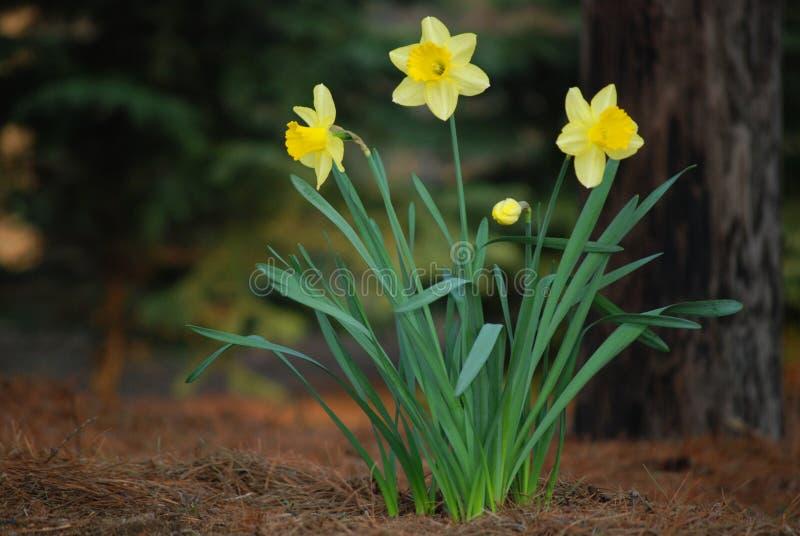 szyldowa wiosna zdjęcia stock